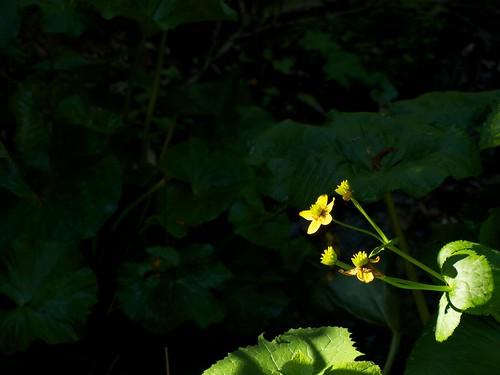 咲き残って光り輝く