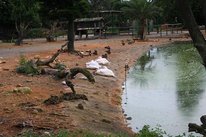 六福村動物園050