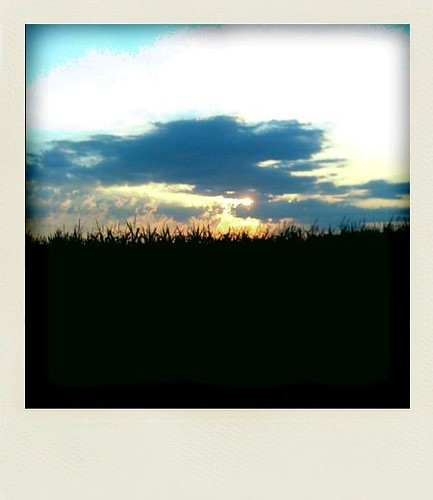 Sunrise over the cornfield
