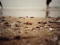 """""""在七月我总能突然回到荒凉。"""" (picozhang) Tags: trip travel sea film seaside pebble 中国 qingdao 旅行 海滩 青岛 海边 石子 胶片"""
