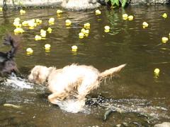 Water Fowling