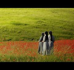 Religiose contemplazioni (s@brina) Tags: green sister explore poppies prato umbria papaveri castelluccio suore contemplazione