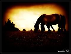 Zaldiak (xomorrotxoa) Tags: caballos natura euskalherria mendia nafarroa zaldiak urbasa