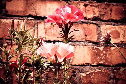 Flowers and brick
