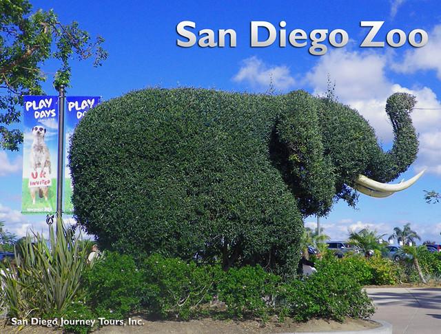 サンディエゴ動物園観光(海外の動物に出会えるオプショナルツアー)
