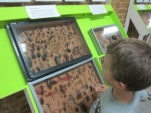 Ezra checks out the bugs