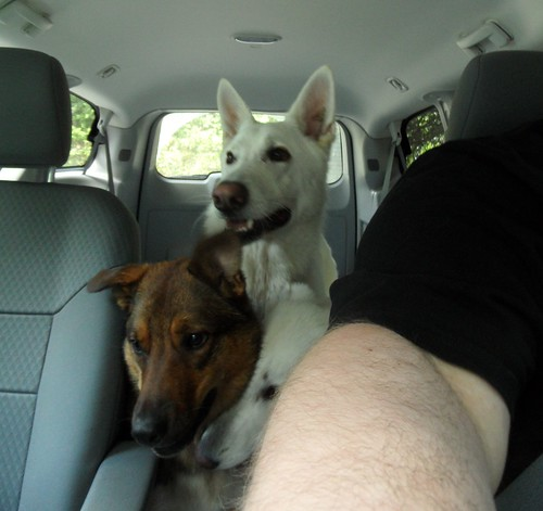 July 13-car ride with all three dogs