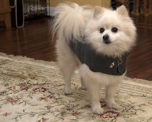 Mel wears his new Thundershirt by reneetellezphotography