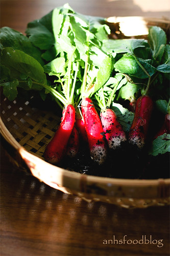 Home-grown French breakfast radishes