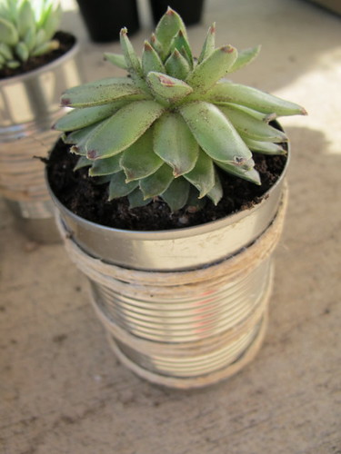 First set of tin can planters #1