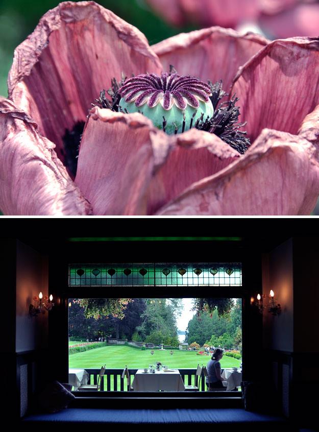 Butchart-gardens-4