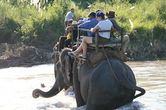 Elephant ride on Safari after the Karnali Adventure rafting and Kayaking trip