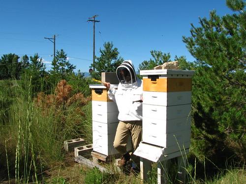 Beekeeper's Assistant