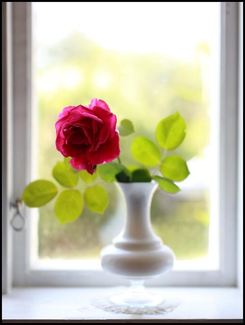 29/52 Rose