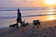 Dog Walker (Eustaquio Santimano) Tags: sunset bali dog indonesia de golden evening waves surfing riding ku walker sensational rays colourful jalan ta sari kuta dewi seminyak anawesomeshot