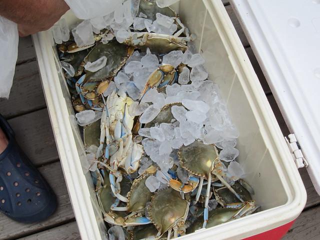 Crabbing et al 034