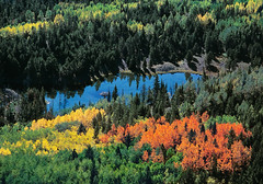 "Beaver pond aerial - autumn (IronRodArt - Royce Bair (""Star Shooter"")) Tags: park blue autumn trees red wild orange lake reflection tree green fall nature water colors beautiful beauty yellow forest season landscape outside outdoors countryside utah high pond woods flora scenery colorful view natural grove outdoor forestry dam background wildlife seasonal scenic aerial beaver foliage national western environment wilderness treetop wasatchcache"