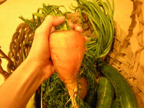 oxheart carrot