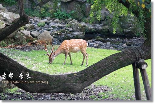 20110711_4thDay Nara_2511 f