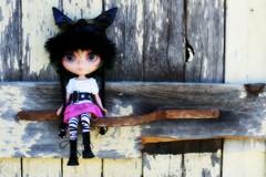 Barn Cat (209/365)