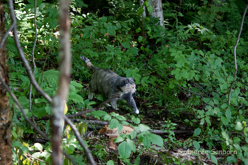 Possum Takes a Hike-7.jpg