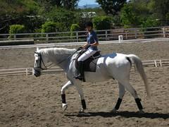 Adiestramiento practica (Cristina Bruseghini de Di Maggio) Tags: caballos galope
