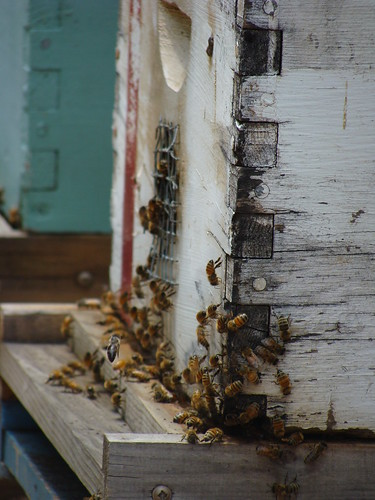 Bees in Action