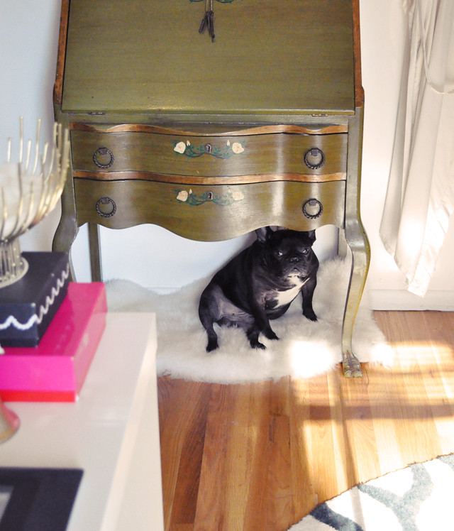 LeRoy under the antique desk