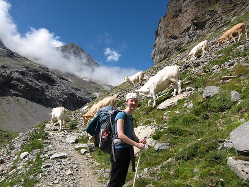 Danalynn with cows by Danalynn C