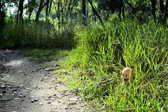 Peek-a-Boo In the Jungle... (1 of 2)