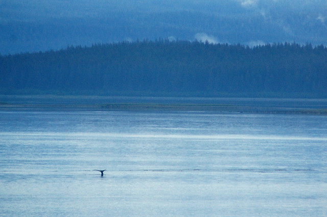 Alaska Cruise / Whale Watching (croped)