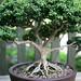 dawes_arboretum_20110625_17283