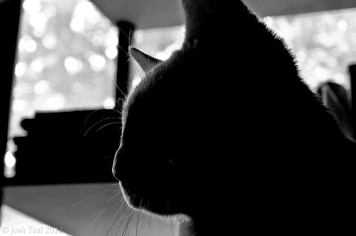 Gozer the Gozerian Cat Silhouette