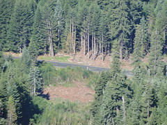 View of road from near Crystal Peak lookout site.