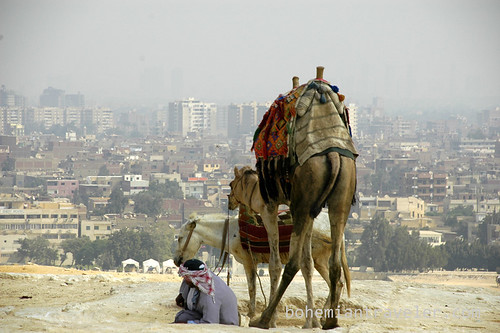 Camel and Cairo