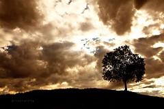 En la colina (47 y 48 EXPLORE - 29 y 30-06-2011) (Jose Casielles) Tags: arbol solo nubes colina solitario loma yecla dramatico fotografasjcasielles