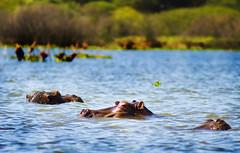 "PhotoFly Travel Club Kenya Safari 2011! • <a style=""font-size:0.8em;"" href=""http://www.flickr.com/photos/56154910@N05/5892433707/"" target=""_blank"">View on Flickr</a>"