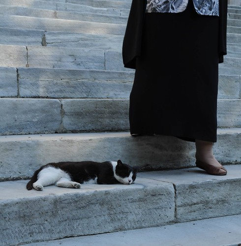 sultanahmet camii merdivenlerinde bir kedi