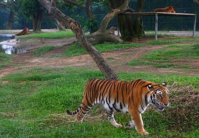 六福村動物園031