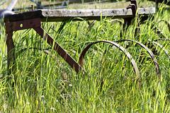 2011-06-14-Fredriksdalsparken-4139.jpg