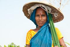 Tea Picker - Srimongal, Bangladesh (uncorneredmarket) Tags: people woman tea bangladesh teagardens teaestates manuallabor srimongal teaplantations ruralbangladesh teapickers sylhetdivision sreemangal
