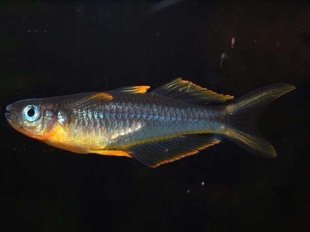 P7102011 霓虹燕子