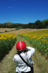 red helmet (Franco Marconi) Tags: blue red sky people italy white green nature yellow landscape design momo europe italia gallery mood fuji helmet s paisagem sunflowers finepix sunflower fujifilm  landschaft fujinon casco girasole marche paesaggio franco processor sensor marconi ascoli girasoli landskap redhelmet  lemarche ascolipiceno  piceno f20  montalto cmos 2011 x100  landslag fujifilmfinepix exr apsc fujix  montaltomarche cascorosso francomarconi fujifilmx100 finepixx100 fujix100 fujifilmfinepixx100 x100 fujinon23mmf20 fujinon23mm fujinonf20