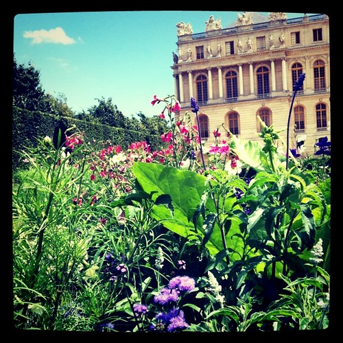 Flowers at Versailles