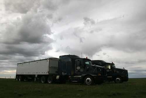Some of the trucks wait to be dumped on hopefully before it rains.
