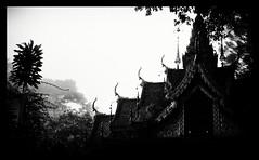 11 (Peter Thwaites) Tags: trees blackandwhite bw mist blur silhouette fog thailand temple jungle thai chiangmai eleven
