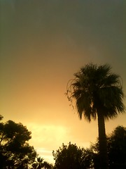 Sunset After the Haboob (Wayne Young Photo) Tags: arizona sky orange storm tree phoenix rain clouds glendale palm monsoon lightning dust thunder haboob gravity2 cloudsstormssunsetssunrises