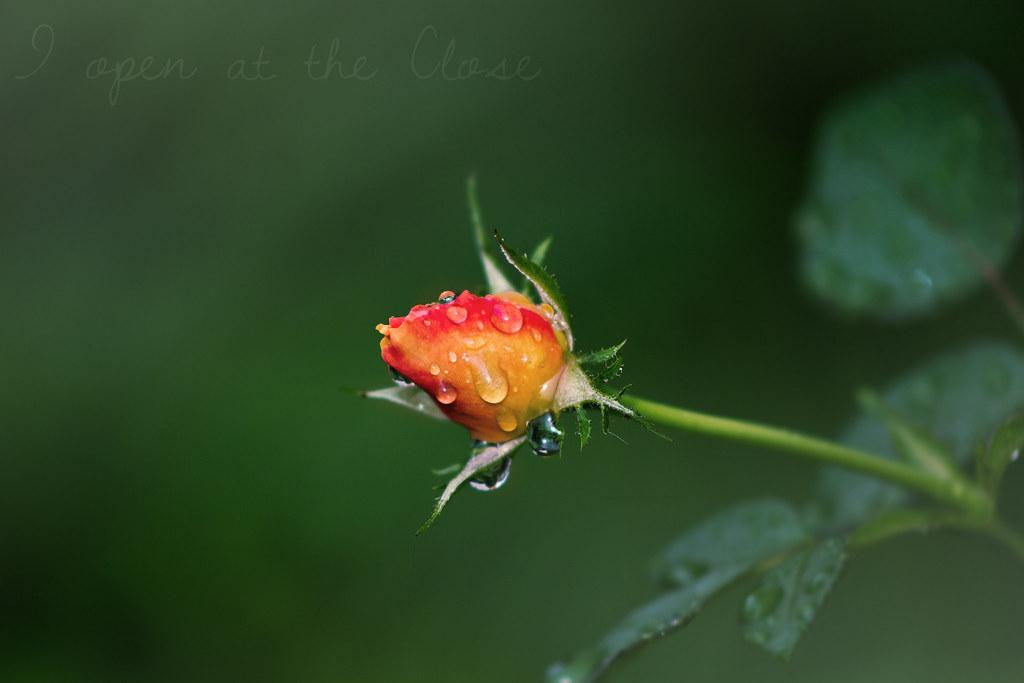 Baby Flower Thwarting Rain