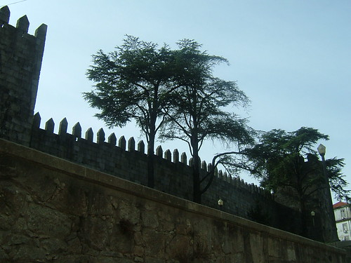 The trees and the wall by margarida belchior