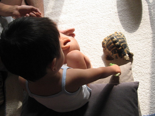 my son and my tortoise